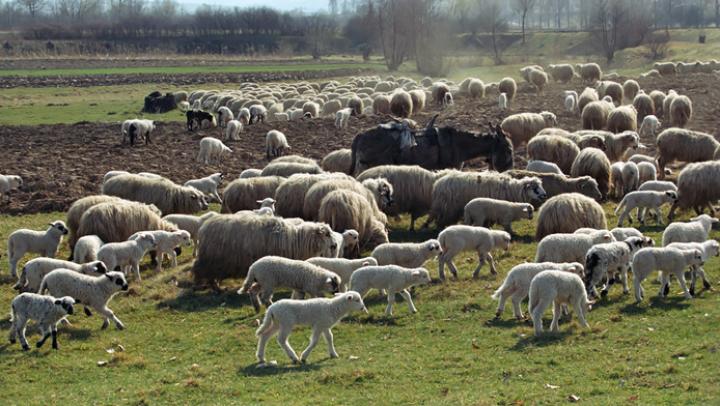 Oile româneşti atacă din nou! Ce s-a întâmplat cu mai mulţi soldaţi americani într-o comună din Oltenia