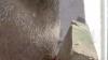 Un copil de doar 9 ani care suferă de autism, bătut cu bestialitate (FOTO)