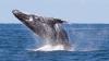 Cinci turiști  au fost răniți, după ce o balenă a lovit barca în care se aflau