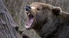 A băgat mâna în cuşca ursului ca să-l hrănească cu lapte condensat. Ce s-a întâmplat mai apoi este ŞOCANT (VIDEO 18+)