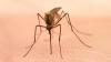 România: Şase persoane au fost infectate cu virusul West Nile, după ce au fost înţepate de ţânţari