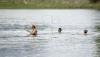 SCĂLDATUL, INTERZIS în mai multe lacuri: Au depistate bacterii periculoase pentru sănătate