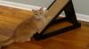 Post vacant pentru o pisică. O companie de construcţii este gata să plătească o mie de euro pentru lucrul depus de felină