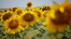 METEO 4 august: Arşiţă sufocantă în Moldova. Meteorologii ar putea emite Cod Roşu de caniculă