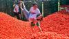 """Festivalul de aruncat roşii, """"Tomatina"""", începe astăzi în oraşul spaniol Bunol"""
