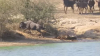 No comment: Un crocodil a atacat o antilopă şi o trăgea în apă. La scurt timp s-a întâmplat ceva ULUITOR (VIDEO)
