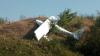 Un avion de mici dimensiuni s-a prăbuşit la Iaşi. Pilotul a murit, iar copilotul este în stare stabilă (FOTO/VIDEO)