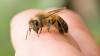 Italia: O moldoveancă a ajuns inconştientă la spital după ce a fost înţepată de o albină