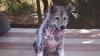 FERICIRE NEMĂRGINITĂ! Un câine adoptat A FĂCUT SENZAŢIE în toată lumea (VIDEO)