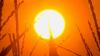 Un nou val de căldură va sufoca Moldova în această săptămână. Meteorologii au emis COD GALBEN DE CANICULĂ