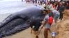 O balenă a eșuat pe o plajă din Brazilia. Ce soluție au găsit oamenii pentru a o salva (VIDEO)