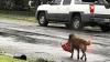 Fotografia cu un cățel la scurt timp după uraganul Harvey a devenit virală. DE CE E CONSIDERAT EROU