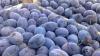 Fructe din Moldova, confiscate la frontiera cu Rusia. În prune s-ar fi găsit larve de molie