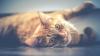 Ziua Internațională a pisicii: În trecut, la moartea felinelor se ținea doliu, toată familia își rădea sprâncenele și plângea