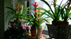 Vrei să ai plante de invidiat în casă? Află despre băutura pe care florile o iubesc la nebunie