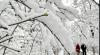 Australia: Căderi de zăpadă record