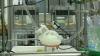 #realIT. Prima inimă imprimată 3D ar putea revoluţiona medicina şi ar salva milioane de oameni