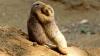 O grădină zoologică a aprobat un program de matrimoniale pentru animale. Creşterea numărului de pui s-a dovedit a fi specaculoasă