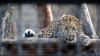 Fructe și legume înghețate, multă apă rece și dușuri: Animalele de la Zoo, afectate de CANICULĂ
