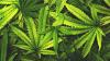 Un oraș întreg din SUA - destinație turistică pentru consumul de marijuana