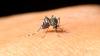 Virusul West Nile face ravagii în România. Şase români au murit din cauza înţepăturilor de ţânţari