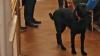 Cuplul Macron a adoptat un câine. Cum a numit preşedintele francez patrupedul