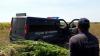 Poliţia de frontiră a depistat un nou lan de cânepă printre plantațiile de floarea soarelui