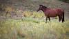 Zeci de cai de rasă, dar şi stăpânii acestora s-au întrecut în cadrul unei curse