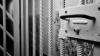 Două adolescente, condamnate la închisoare pentru că au torturat şi ucis animale