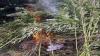 MAC-2017: O fâşie de cânepă de aproximativ 50 m a fost depistată şi distrusă în comuna Bubuieci