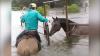 Furtuna Harvey continuă să inunde totul în calea sa. Caii unei herghelii salvaţi în ultima clipă (VIDEO)