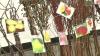 Puieți de pomi din Moldova, interziși în Rusia. Se presupune că aceștia ar conține substanțe dăunătoare