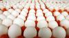Două persoane au fost arestate în Olanda privind dosarul ouălor contaminate