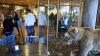 Suedia: Un urs brun a atacat și a rănit grav un îngrijitor de la un parc zoologic