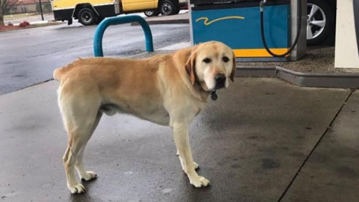 Un tânăr a găsit un câine pe stradă! MESAJUL SURPRINZĂTOR scris pe medalionul pe care îl avea la gât