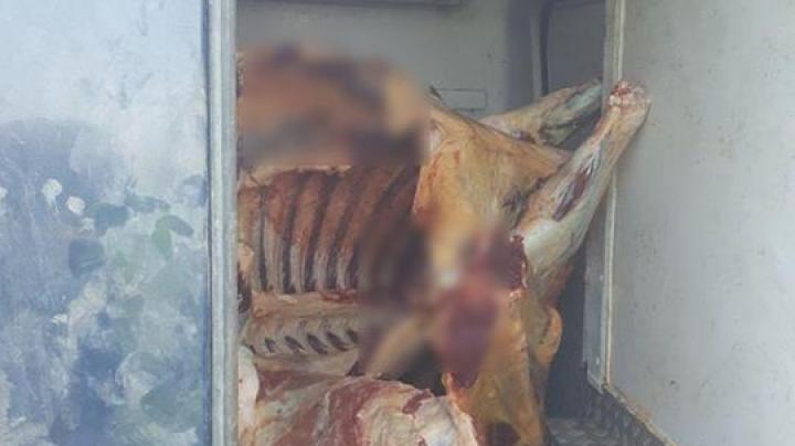 Jumătate de tonă de carne de bovină, transportată fără acte (FOTO)