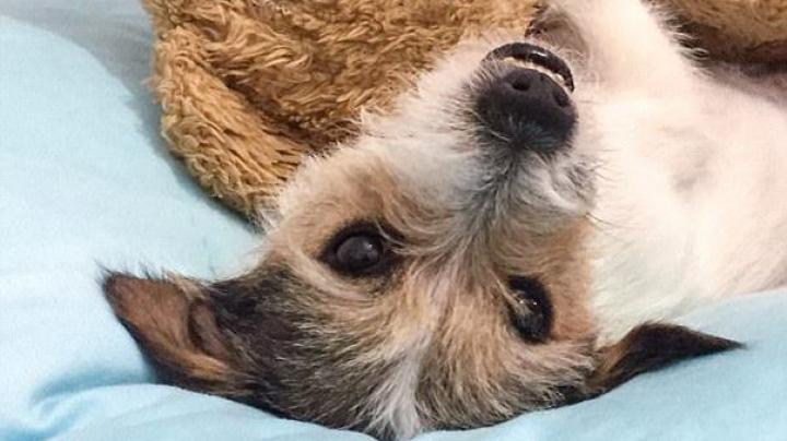 VIDEO VIRAL: Reacția unui câine la clipul DESPACITO. Ce face patrupedul atunci când se oprește melodia
