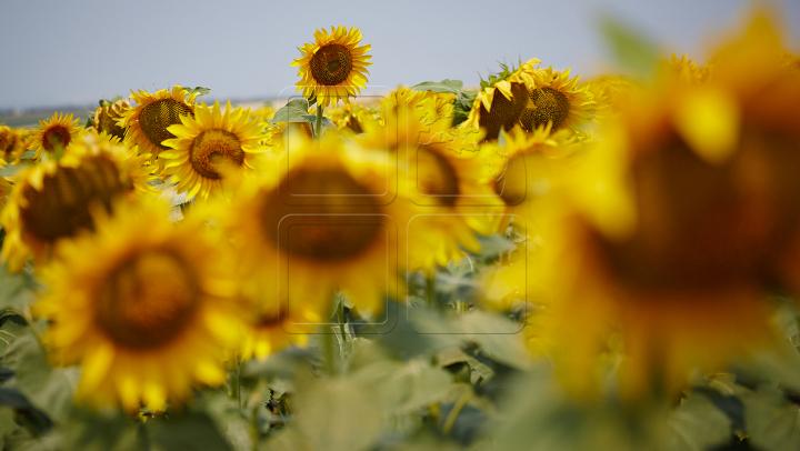 Moldova se va sufoca de căldură! Ce temperaturi ne aşteaptă în următoarele zile