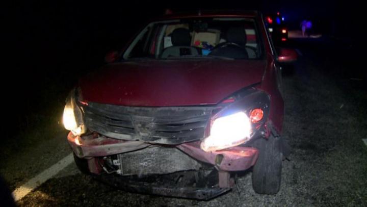 Accident neobișnuit în România! O Dacia Sandero a reușit să omoare nu mai puțin de 33 de mistreți