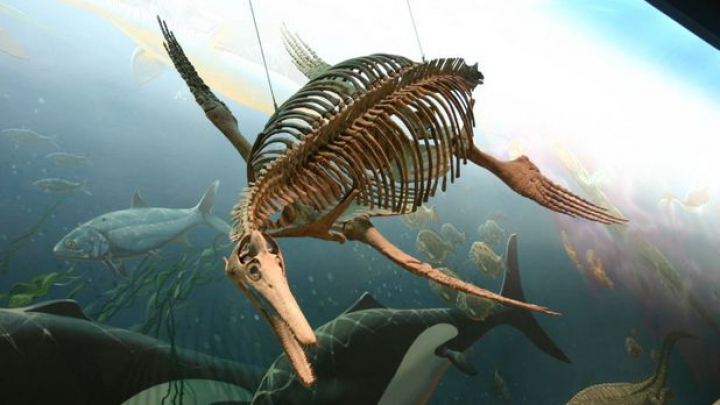 A fost descoperită cea mai mare fosilă a unui ''dragon de mare'' care a trăit în urmă cu 200 milioane de ani