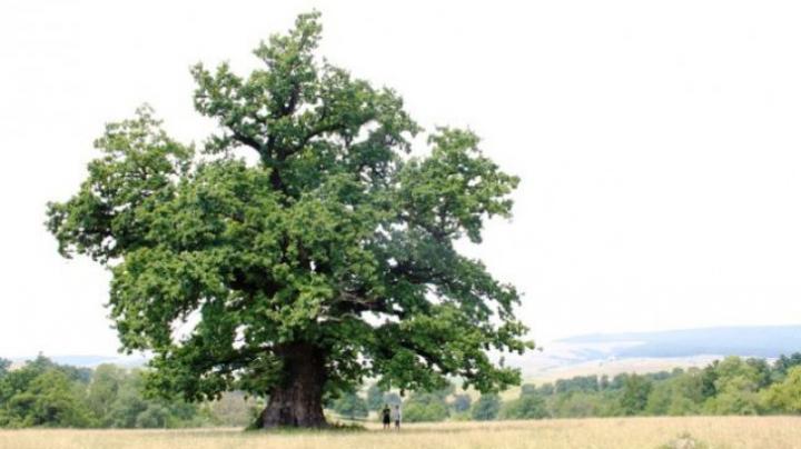 Un bărbat a plantat 1000 de stejari în memoria soției lui.  Ce a răsărit 10 ani mai târziu este DE NECREZUT (FOTO)