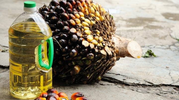 STUDIU: Industria uleiului de palmier, responsabilă pentru 39% din suprafaţa forestieră distrusă în Borneo după 2000