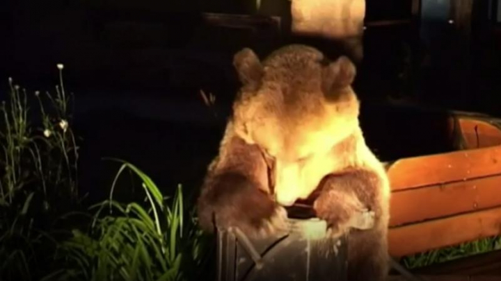 """""""Urşii gunoieri"""" din România au ajuns în văzul presei britanice. Animalele au invadat un oraş din România"""