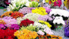 Florile la mare căutare. Zeci de părinți și copii s-au îmbulzit ca să cumpere buchete pentru prima zi de școală