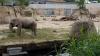 Moştenire de 22 de milioane de dolari Grădinii Zoologice din Koln, Germania