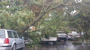Ploile şi vântul puternic au făcut ravagii în România şi Ucraina