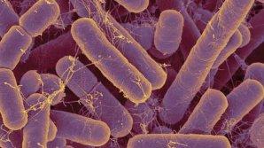 Majoritatea microbilor din organismul uman sunt necunoscuți științei