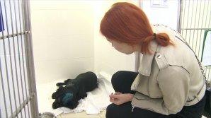 Eroii din Capitală. Un cuplu din Chişinău a făcut sute de kilometri pentru a salva un câine bătut cu cruzime