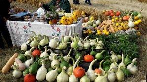 Cel mai mare dovleac din Moldova, vedetă la Festivalul Bostaniada