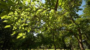Dezvăluiri privind MISTERUL ce stă în spatele diferenței de mărime dintre frunzele tuturor speciilor de plante